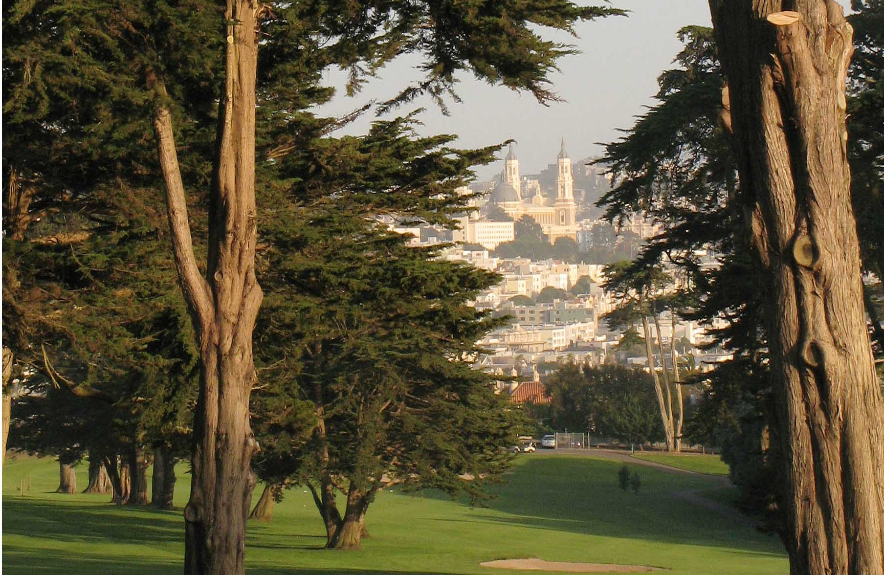 tall trees with city view 10 green to 9 fairway hort